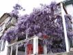 Aanbiedingen Ohrid
